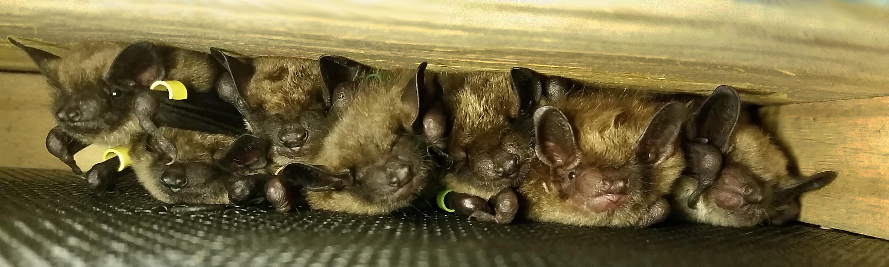 Sassy and baby bat pups