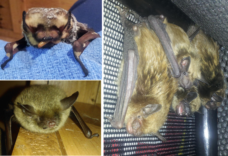 WTS bats!