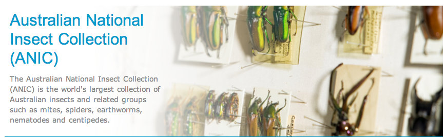 Australian National Insect Collection