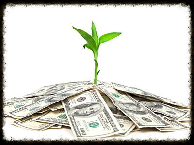 Image: Plant sprouting from paper currency