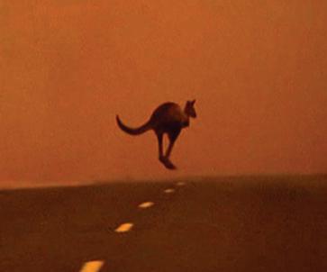 Photo of kangaroo hopping through smoke