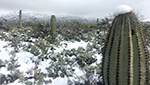 Cactus capped with snow.