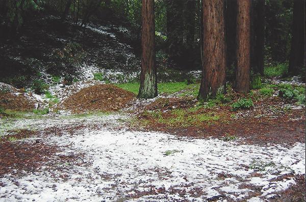snow in the Chemeketa Park