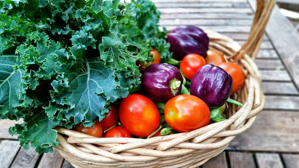 photo of natural colored basket with fresh kale, tomatoes, and purple peppers