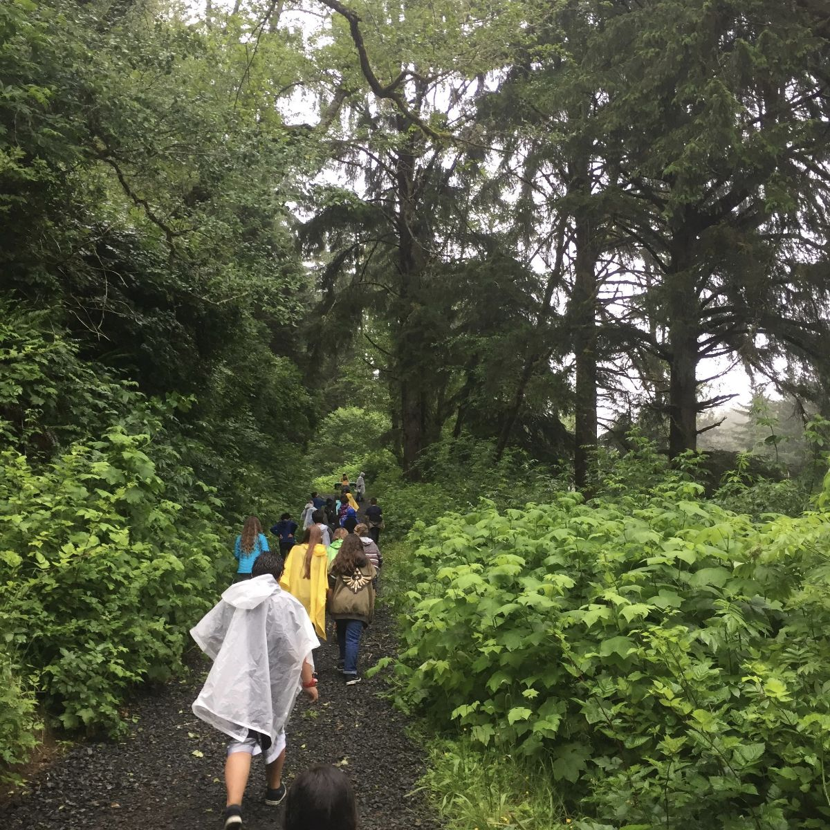 Students walking in a coastal forest. Photo: Oregon Sea Grant