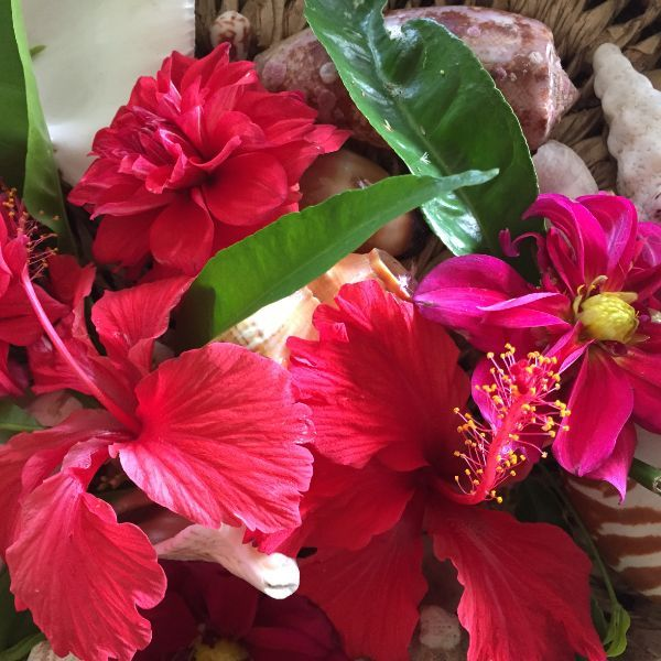 Hibiscus blooms and seashells on Taveuni Island