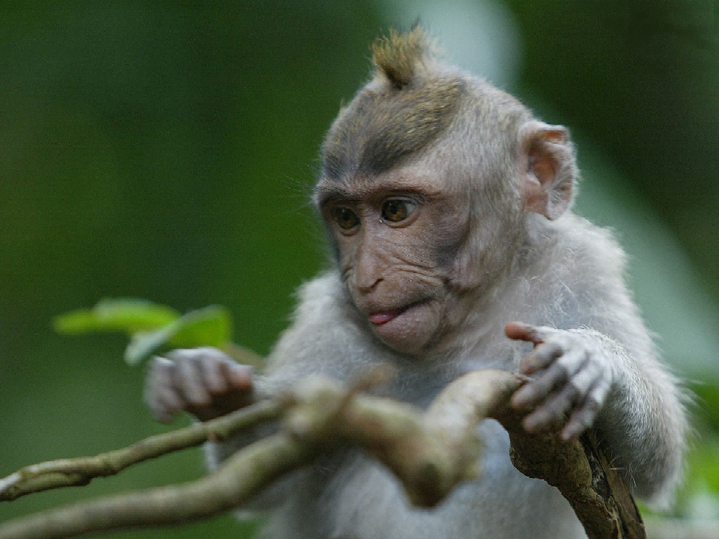 """Little monkey branch driver! Click """"Enable Images"""" to see it."""