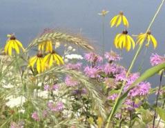 Enabling Wild Flowers in the Park