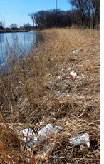 Trash in Lincoln Park