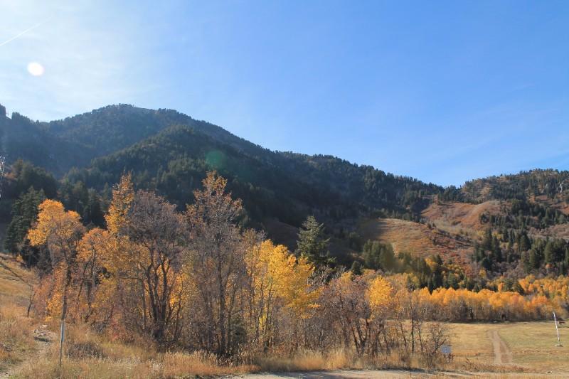 Mt Shasta - Dorothy Rowe - Distance Energy Work