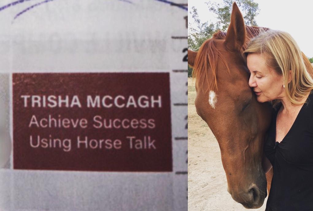 AMAZING HORSE EXPERIENCES