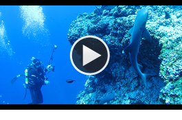 diving-for-data