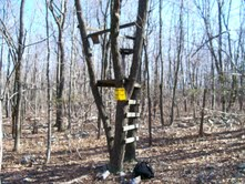 Wooden Tree Stand (photo by Tom Hurd)