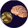 Brain-Eating Amoeba Illustration