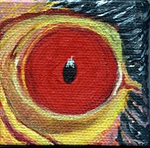 Calif. Condor Eye