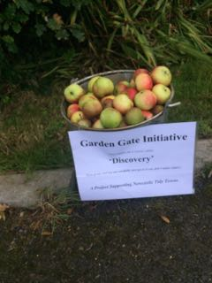 Picture of apples for free on Sea road this week