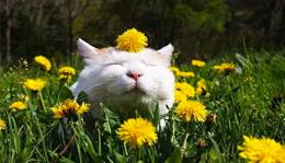 Cat enjoying spring sunshine