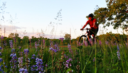 Mountain Biking at Island Lake in Brighton, MI