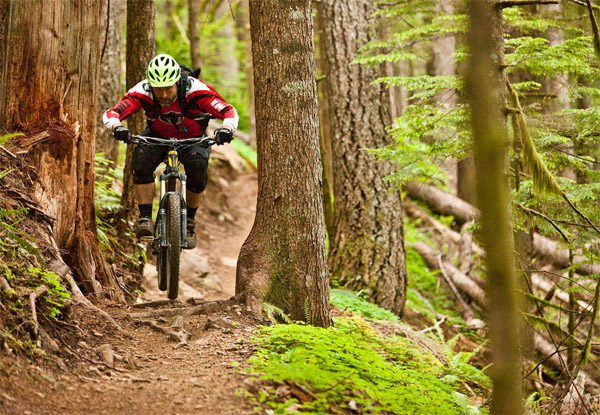 Mountain biker on single track in the woods