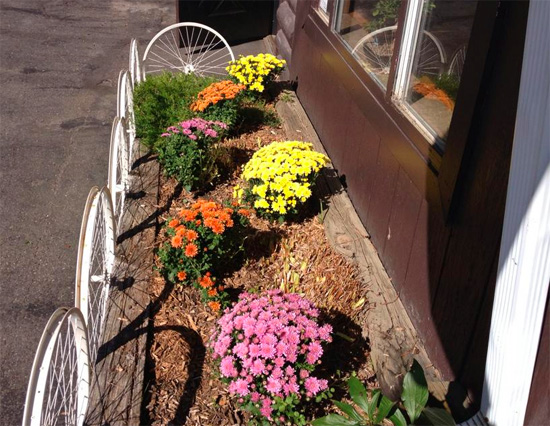 Hometown Bicycles Whitmore Lake Fall Mums