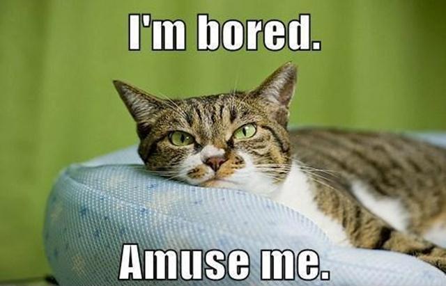 Bored cat meme