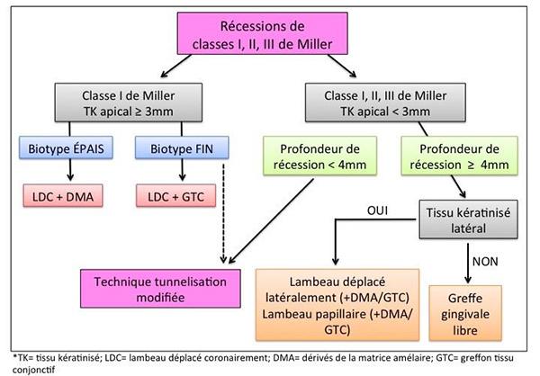Fig. 4: Arbre décisionnel pour le traitement de récessions de classes I, II et III de Miller selon la présence de tissu kératinisé dans la zone apicale et latérale de la récession, la profondeur de la récession et le biotype gingival (Stein & Hammacher, 2012).