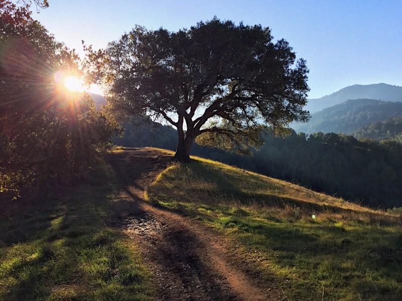Yolanda Trail