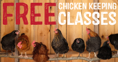 Free Chicken Keeping Classes