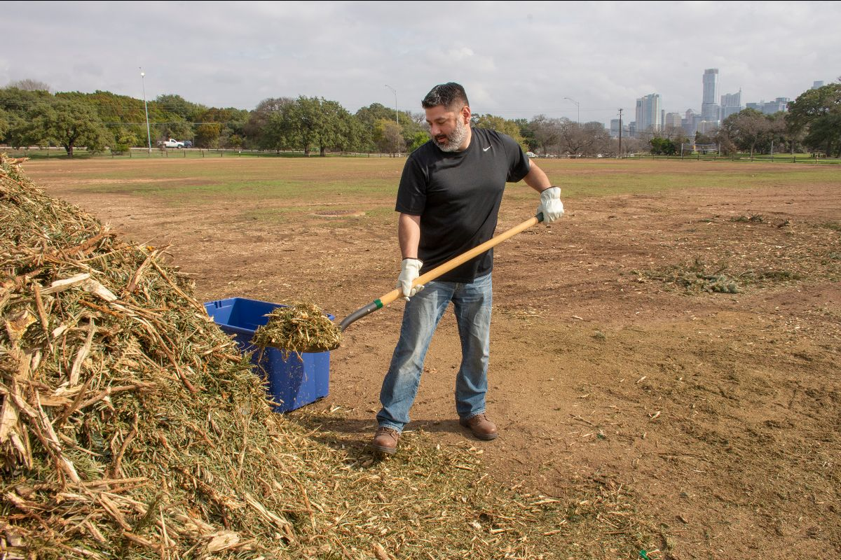 Man gathers Christmas tree mulch at Zilker Park to take home