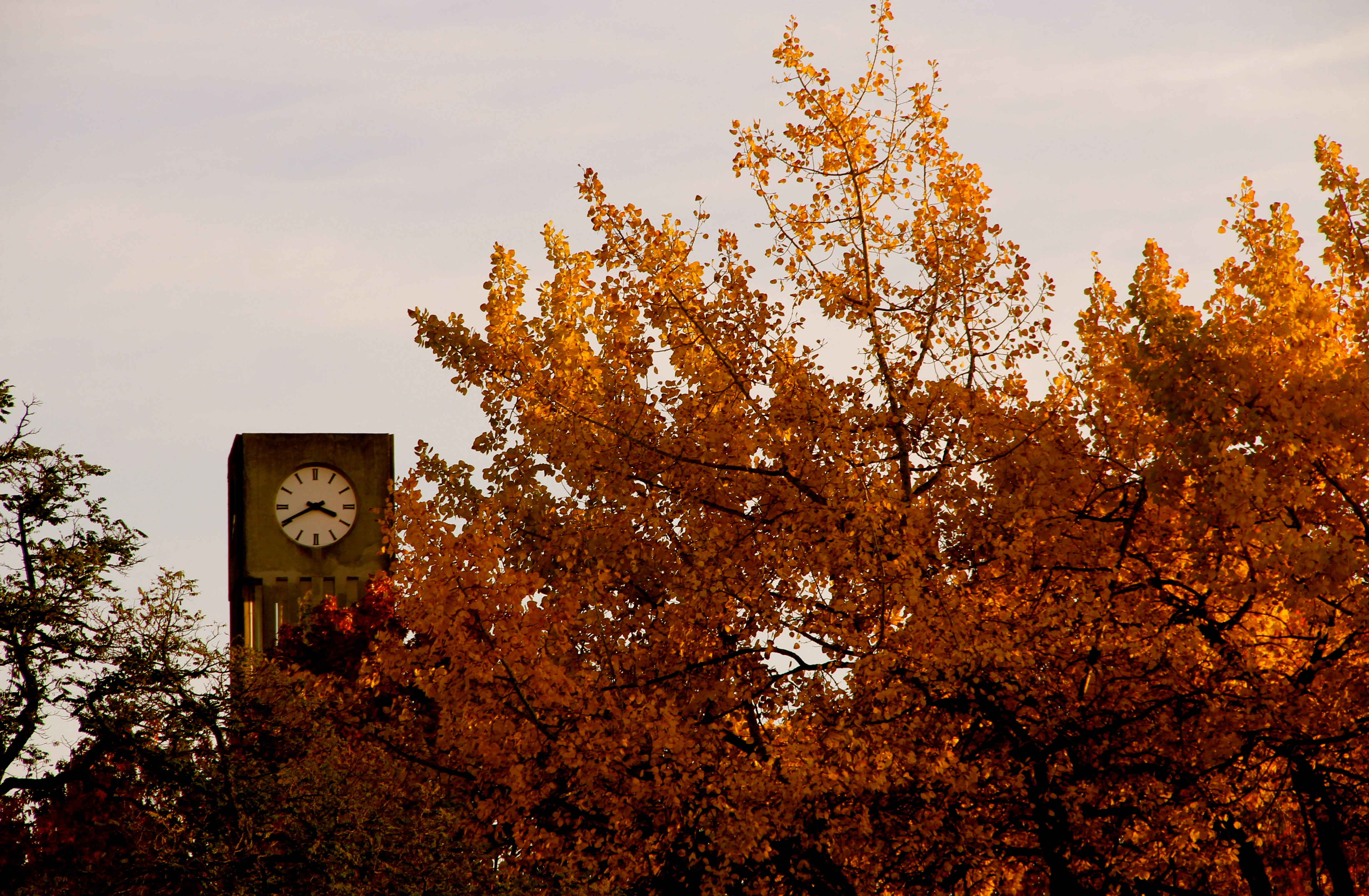 UBC Clock Tower in the Fall