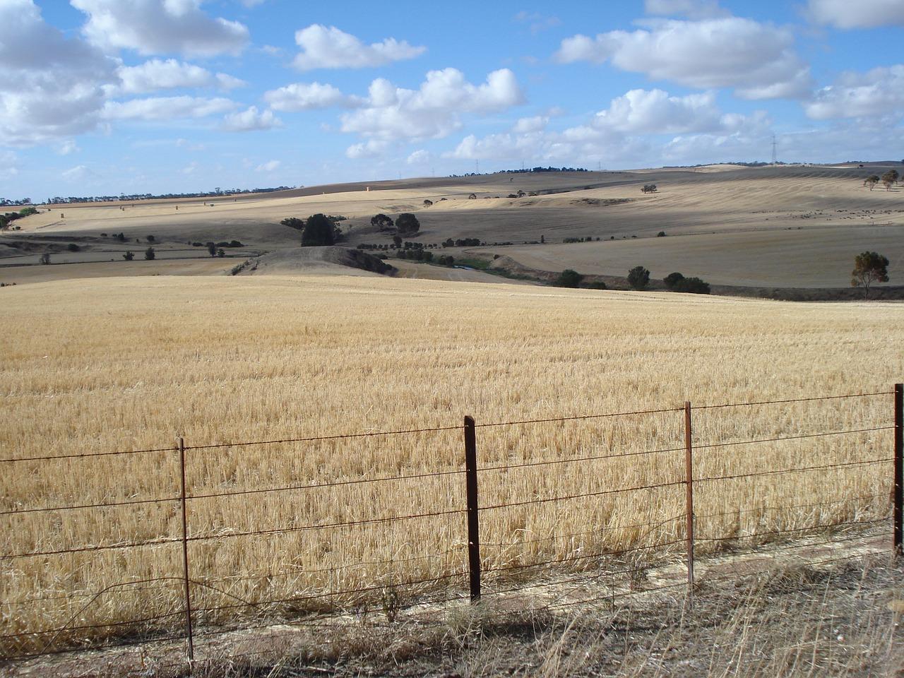 Australian crops