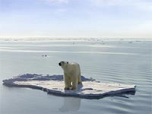 polar bear climate change