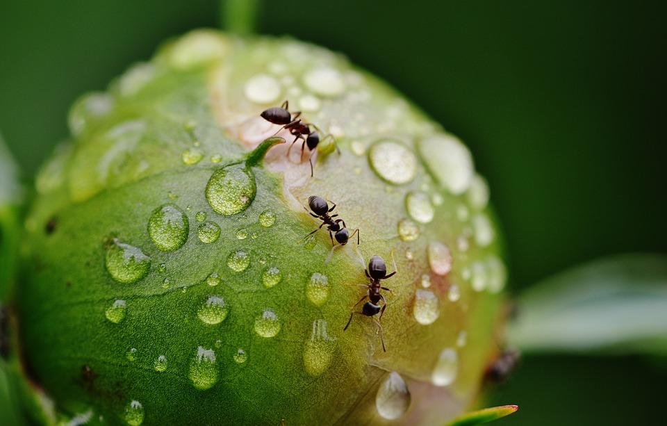 Med Myrejagten hjælper I forskerne med at blive kloge på myrernes liv.