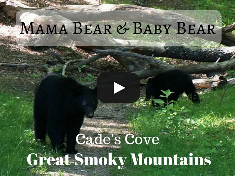 Close Encounter with Black Bear Mama and Cub!