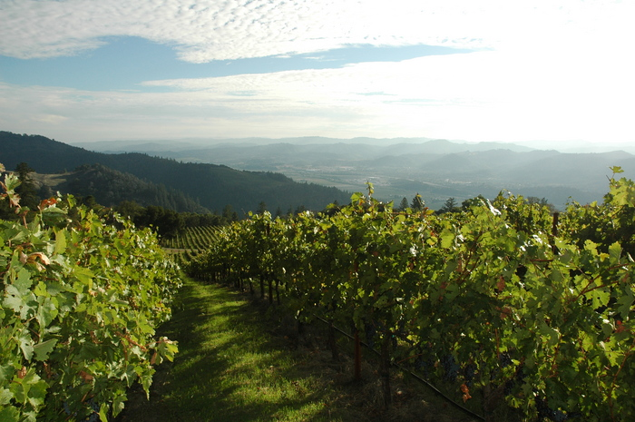 Arbios Vineyard View