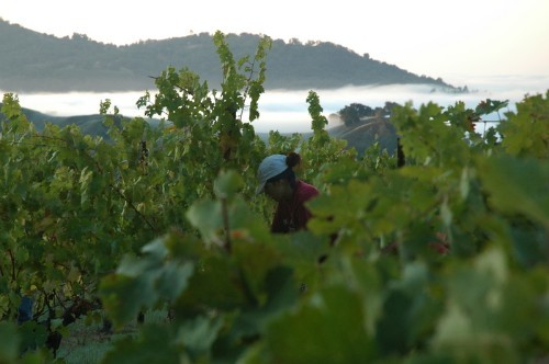 Arbios vineyard worker
