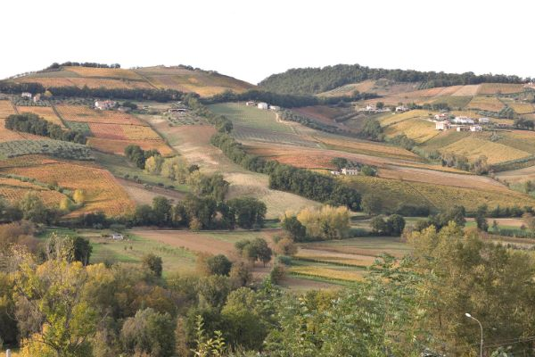 villamagna-hillside-vineyards
