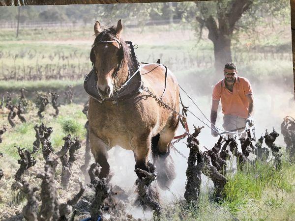 Domaine-Aspras-Horse-Ploughing