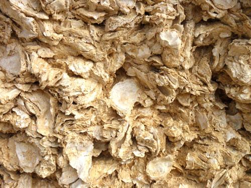oyster-soil-sainte-croix-du-monts