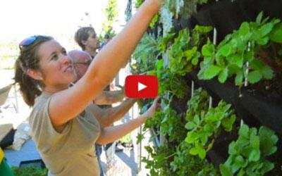 Vertical Herb Garden for Bartenders by Living Green Design