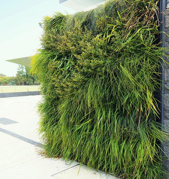 Wild Grasses Vertical Garden by Fytogreen Australia