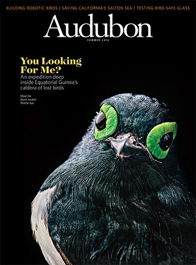 Tristan Spinski for Audubon Magazine