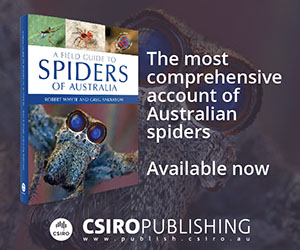 A field guide to spders of Australia available now from CSIRO Publishing.