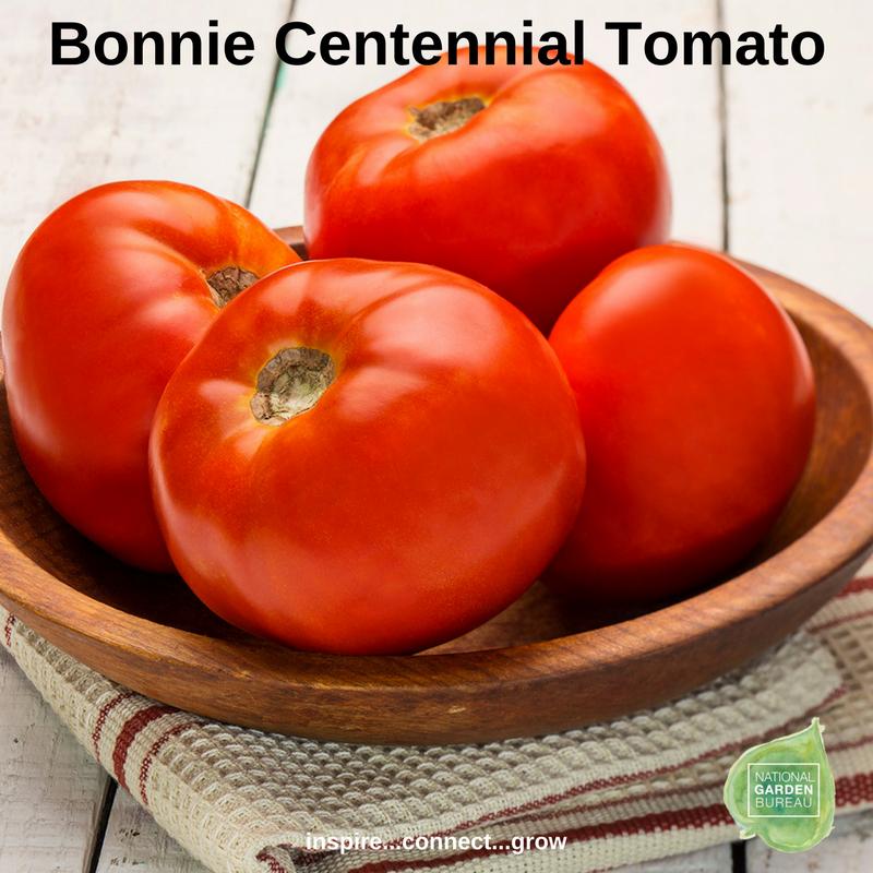 Bonnie Centennial Tomato