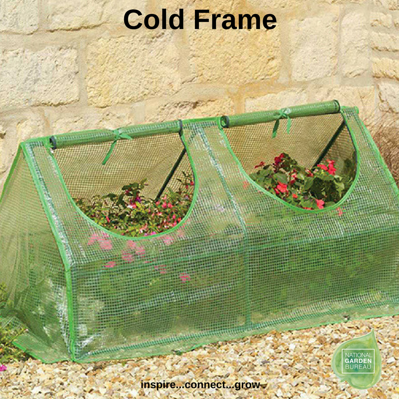 Cold Frame - Jung Seed