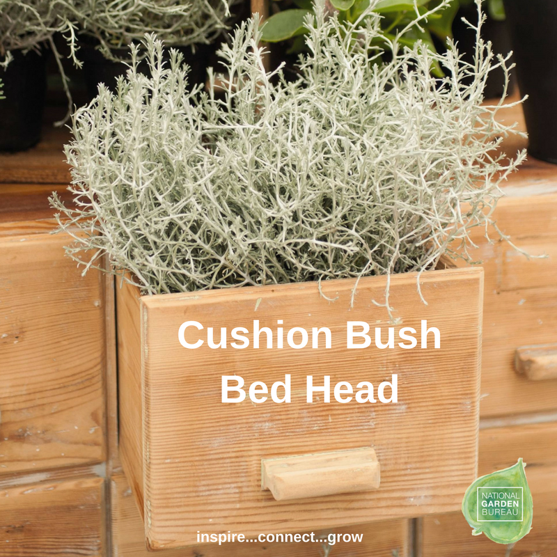 Cushion Bush Bed Head