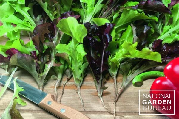 Lettuce Bistro Blend