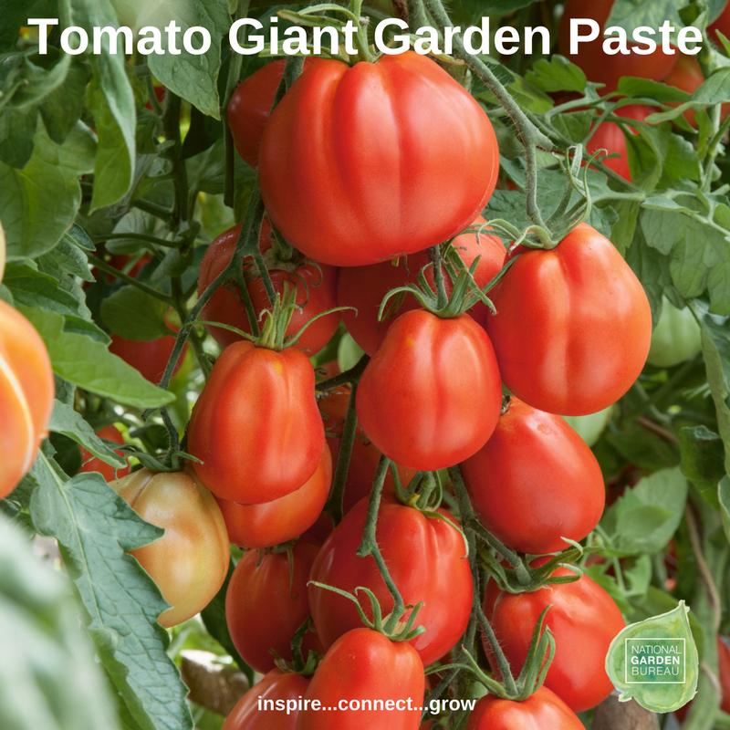 Tomato Giant Garden Paste