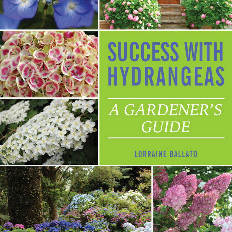 Success with Hydrangeas