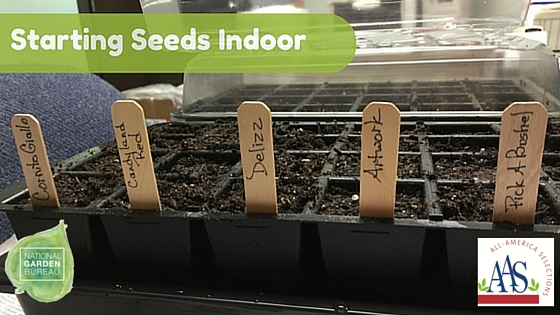 Starting Seeds Indoor